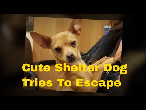 Cute Dog : Shelter Dog Tries To Escape And Gets Adorably Stuck