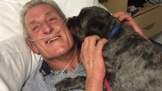 Miracle Dog Honored for Bringing Owner Out of Coma Early
