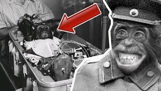 Maymun İnsan Karışımı Irk Deneyi
