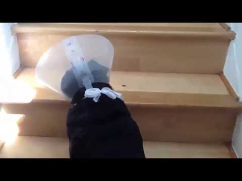 FUNNY VIDEOS: Animals Wearing Cones Compilation [ New 2014 ]