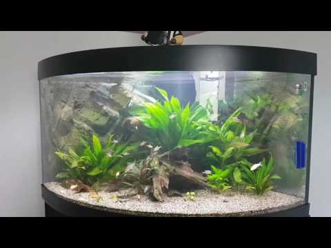 juwel automatic feeder / roter Kolumbianer