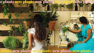 updating my plant collection new houseplant haul