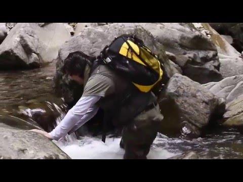 """Vidéo """"Au coeur de la vie sauvage de Bornéo"""" (2016)"""