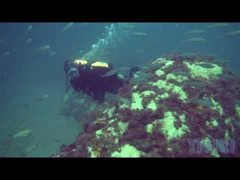 Offshore Jacksonville Artificial Reef Diving with Channel 4 News