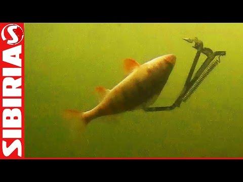 Капкан на щуку подводные съёмки. Ловля щуки на капкан. Подводные съёмки  поведение живца