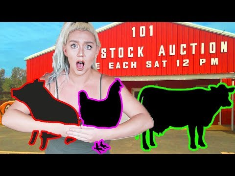 RESCUING 3 ANIMALS AT A LIVESTOCK AUCTION HOUSE