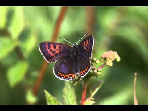 21 mooie kleurrijke vlinder - photo #41