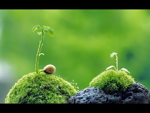 How Plants Communicate & Think - Nature Documentary HD