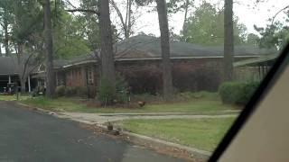 Fitzgerald Georgia wild chickens 2