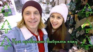 Как выбрать елку  Руководство Оза   Киев днем и ночью