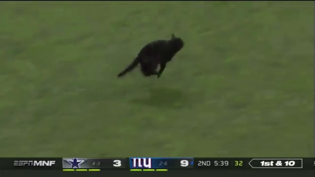 Black Cat On Field At Metlife Stadium Giants Vs Cowboys Monday Night Football Youtube