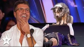 Judges Fall In Love With Magic Dog Act on America's Got Talent | Got Talent Global
