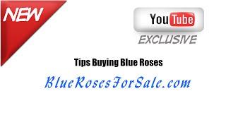 Bluerosesforsale.com- Information About Blue Roses Online