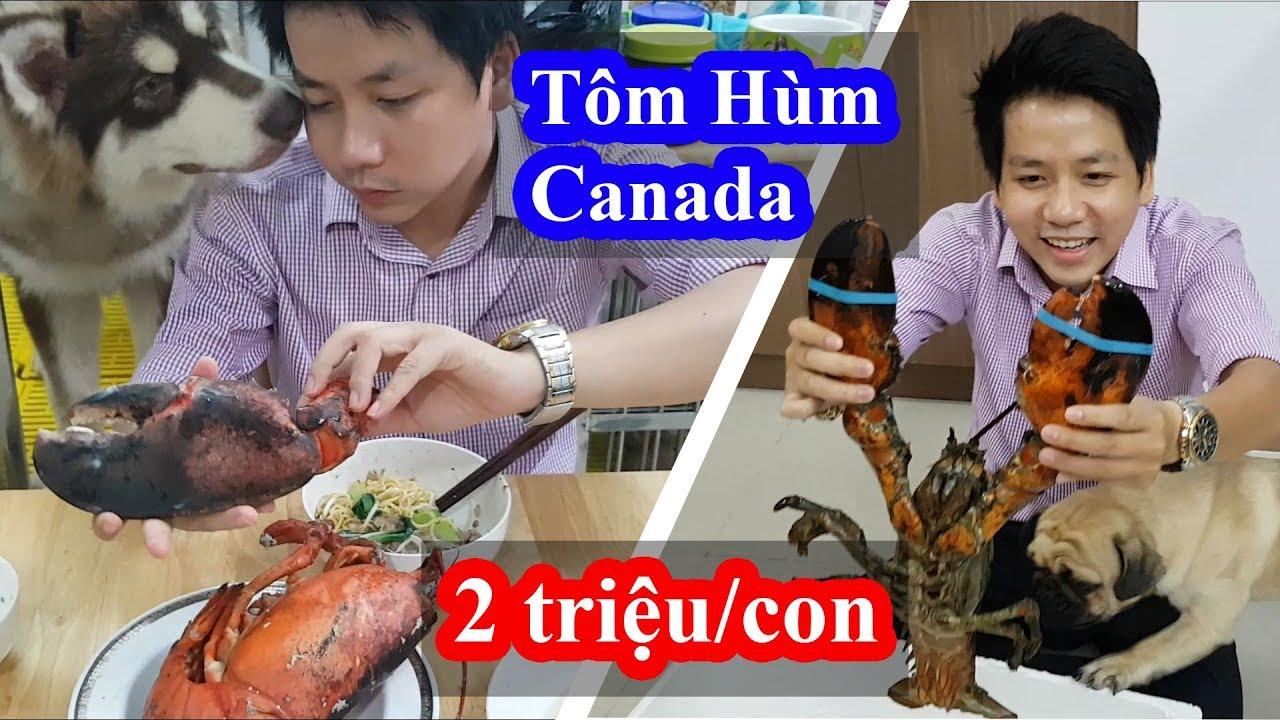 Eat Canadian LOBSTER at VietNam | Ăn thử Tôm Hùm Canada Khổng Lồ 2 triệu 1 con tại Việt Nam