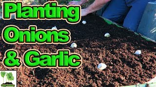 How To Plant Onions And Garlic