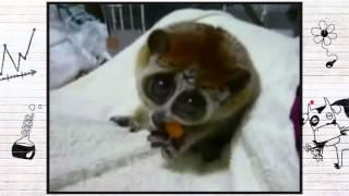 Прикольные ЖИВОТНЫЕ - самое смешное и мимишное видео!!!