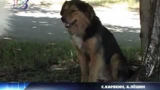 Проблема: бродячие собаки(Животные и люди - возможно ли мирное сосуществование? Вопрос этот, похоже, становится риторическим. Ведь..., 2012-02-09T08:15:50.000Z)