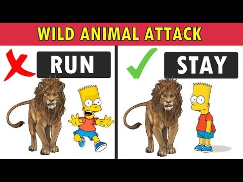Can You Survive If Wild Animals Attack You ? Fun Test