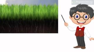 Урок 21 Природознавство 1 клас. Що таке  ґрунт?