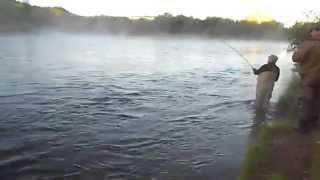 Кольский полуостров. Пойманная семга на реке Кола в п. Шонгуй.