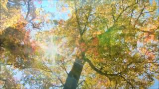 Arzu Rzayev - Осень