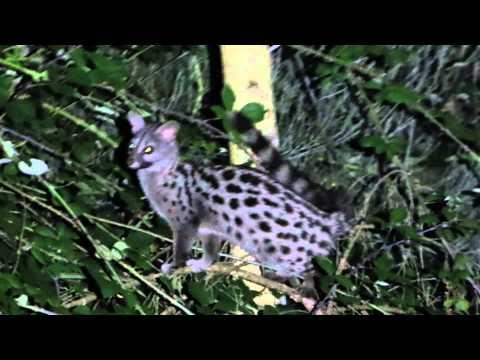 Vida Selvagem Parque Nacional Peneda Gerês Wildlife National Park of Peneda Gerês