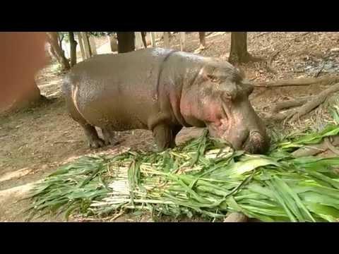 Dhaka Zoo VID 20150327 143846