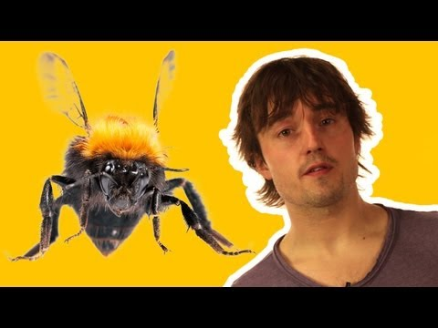 How do insects fly? - Sci Guide (Ep 25) - Head Squeeze