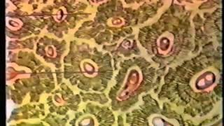 Общее знакомство с организмом человека