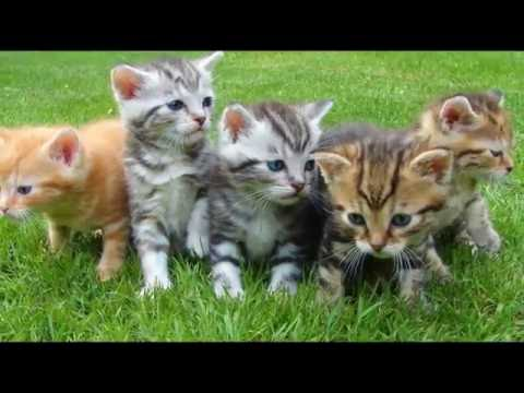 Watch cute cats and kitten | Full HD