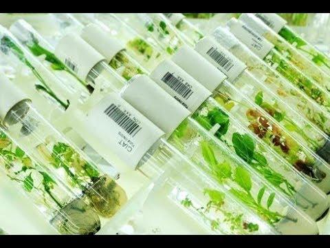 SATG Ma isticmasha GMO? -Ask Dr. Hussein [HD]