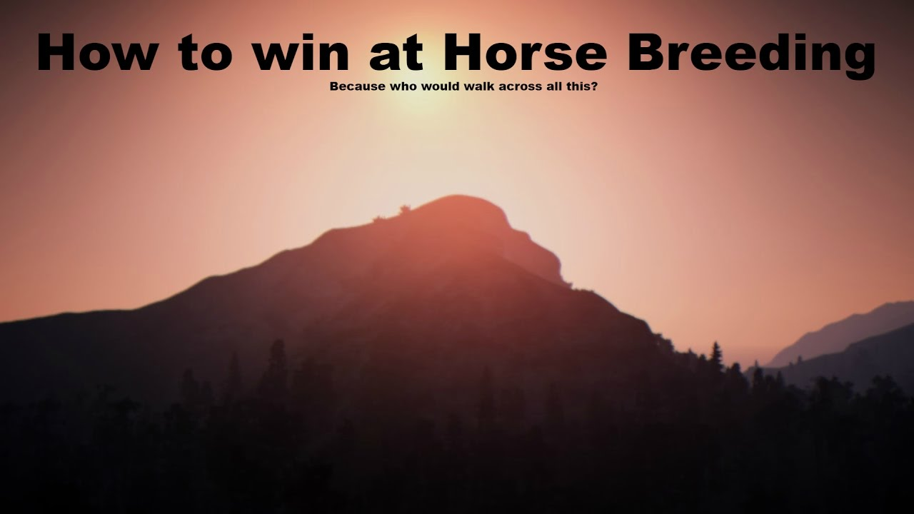 How to become a Breeding God! | Horse Breeding in Black Desert Online Guide