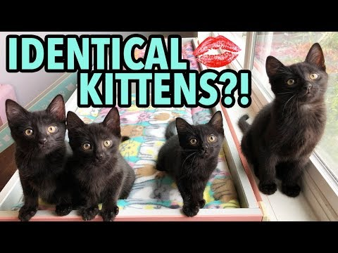 The Dot Method: How to Tell Kittens Apart Using Lipstick!