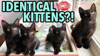 the-dot-method-how-to-tell-kittens-apart-using-lipstick