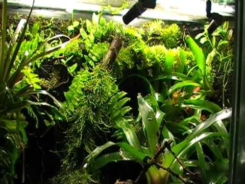 dendrobates azureus terrarium