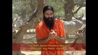Cow Protection - A Mega Mission: Message from Yog Rishi Swami Ramdevji Maharaj