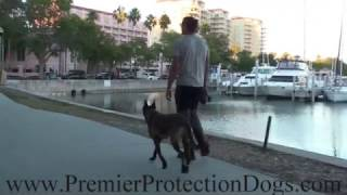 Premiere Protection Dog off leash City Walk