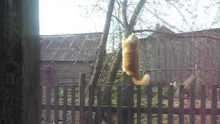 Иногда ничто так не успокаивает,как кот!!!  XDDDDDDD