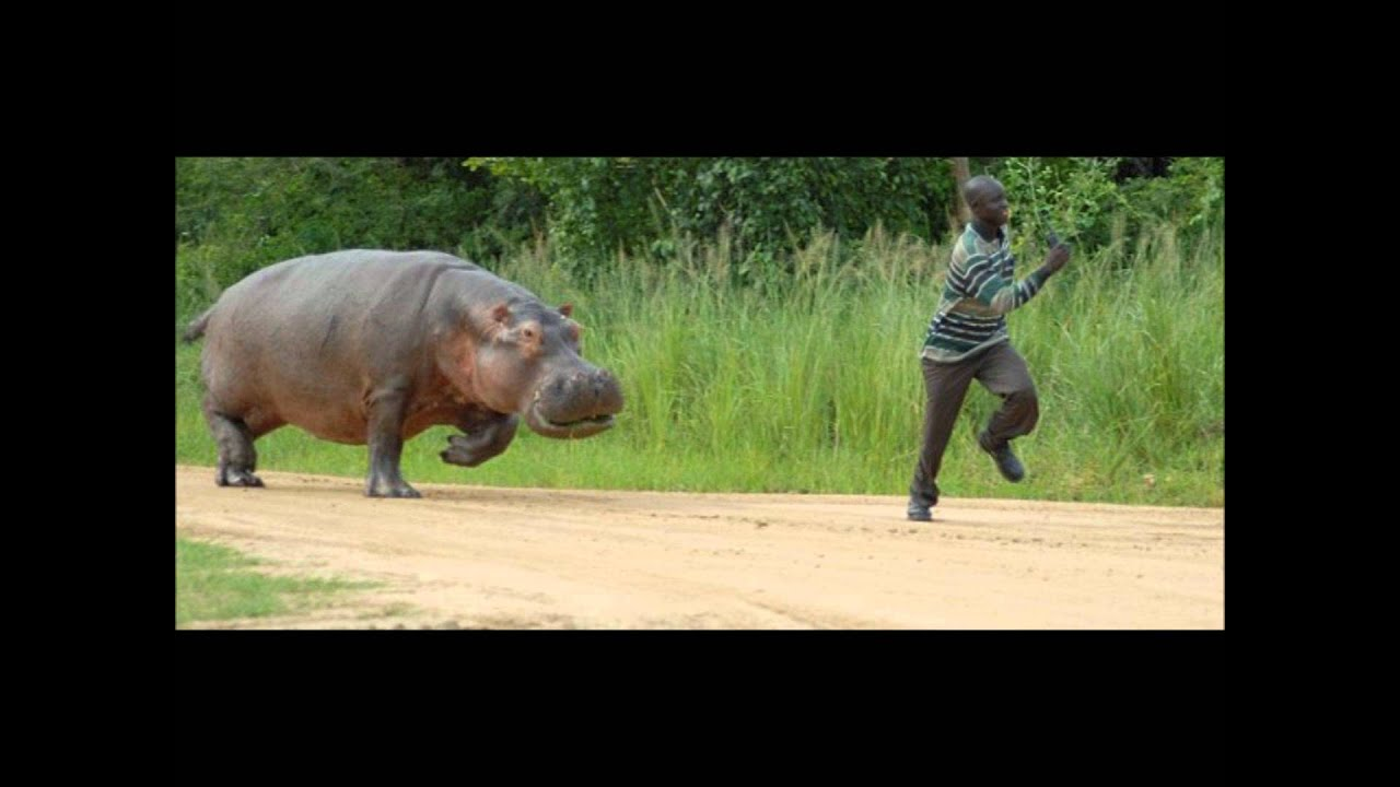 Hippo Meme Chasing - Year of Clean Water