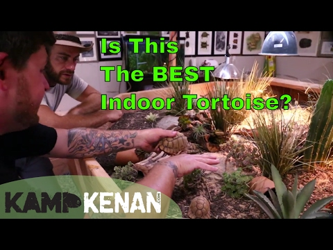 Great Indoor Tortoises & Turtles!