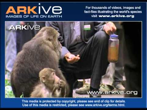 Macaque Stealing From Tourists YouTube - Monkey knows how to operate vending machine
