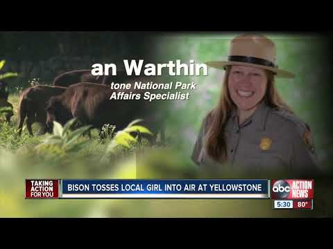 Florida girl tossed in air after bison charges Yellowstone tourists