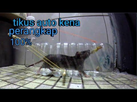 Cara Membuat Perangkap Tikus Dari Botol Plastik Bekas (make A Mousetrap From Used Plastic Bottles)
