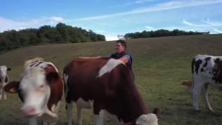 Devenir éleveur, pourquoi pas moi - Ep. 1 - éleveur de vaches laitières