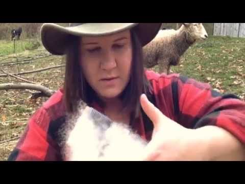Episode 13: How To Turn Wool Into Yarn