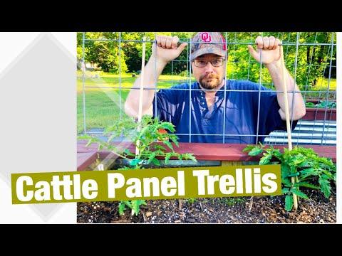 Cattle Panel Trellis for Galvanized Metal Raised Garden Beds