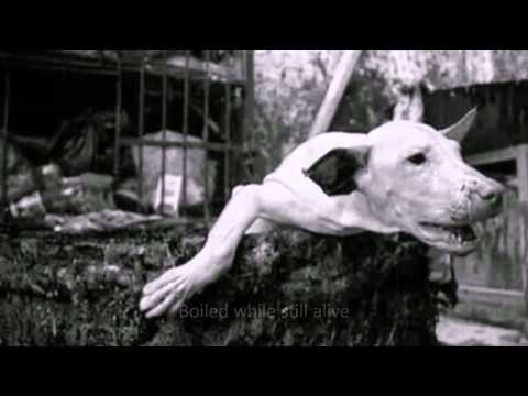 Dog Cat Meat