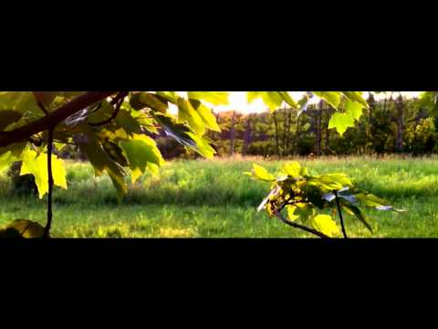 iPhone 4 Film Look Video Test