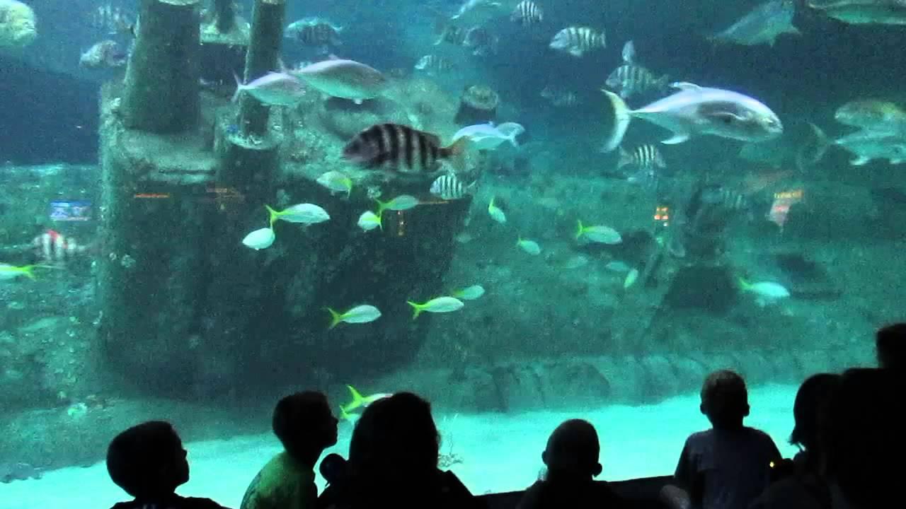 Nc Aquarium At Pine Knoll Shores Youtube