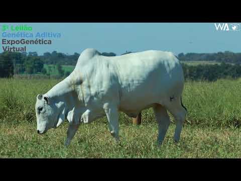 LOTE 18 - REM 10253 - 3º Leilão Genética Aditiva Expogenética 2020